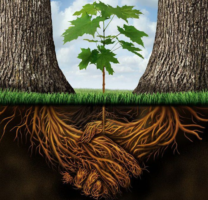Organisational Wellbeing Equals Sustainable Growth?